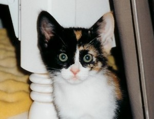 Gabby kitten